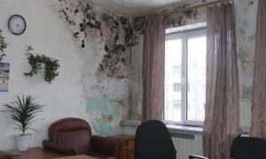 Плесень на стенах вред