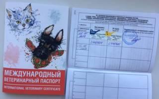 Как правильно заполнить ветеринарный паспорт собаки овчарке образец